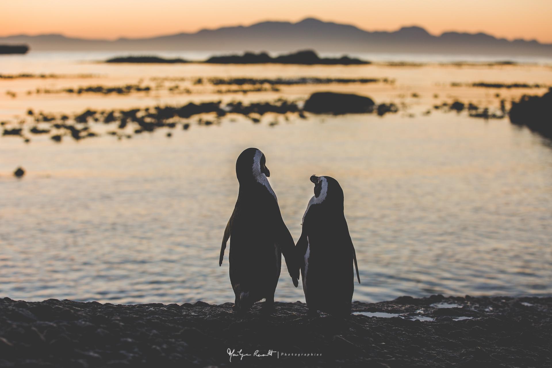 2015-04-Cape Town-40