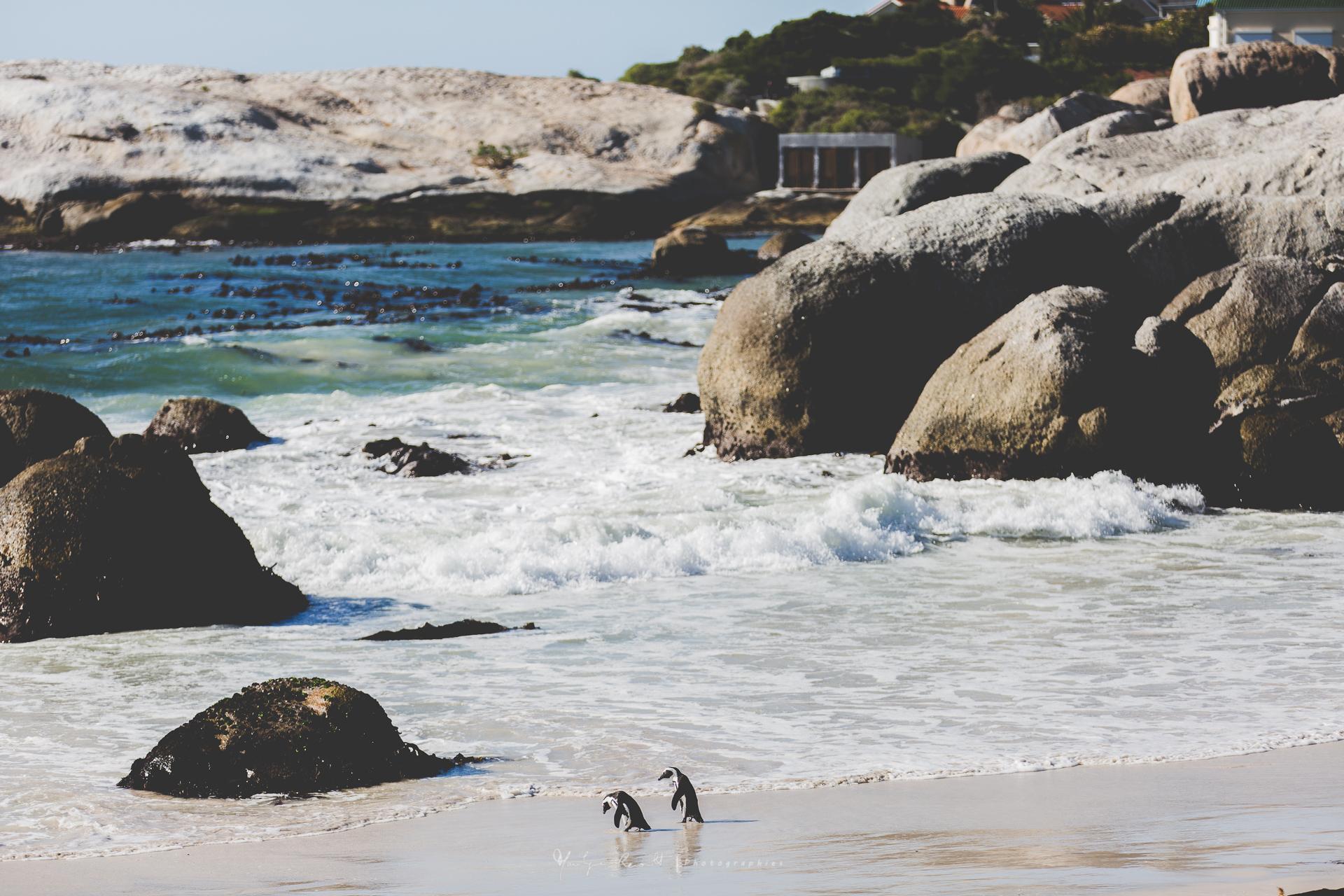 2015-04-Cape Town-9