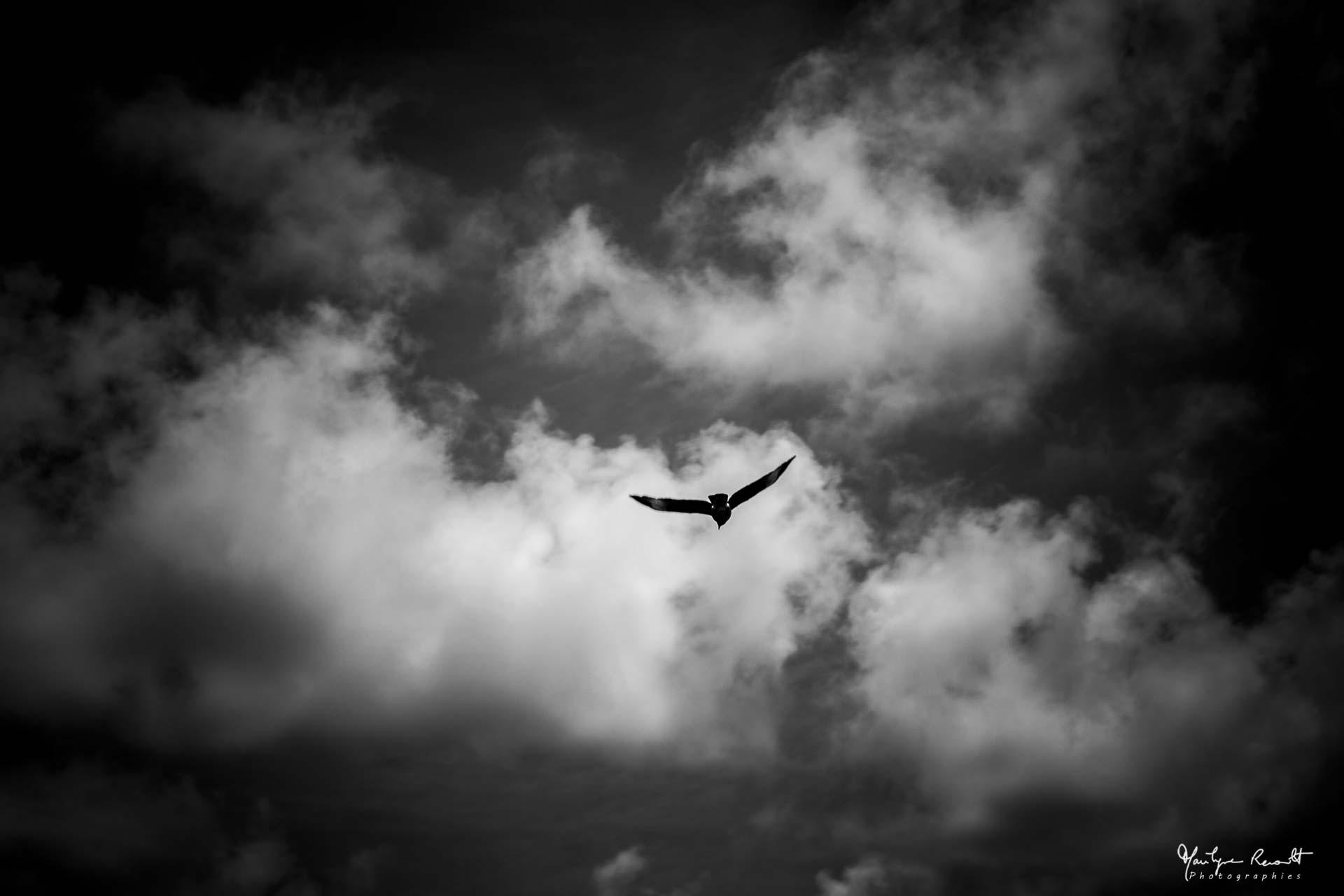 bird_eastern island